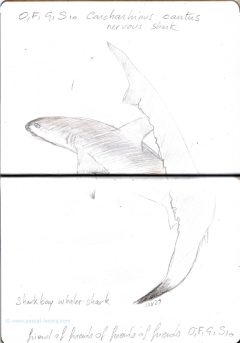 Carnet Bleu: Encyclopedia of…shark, vol.X p 26, pencil  - by Pascal