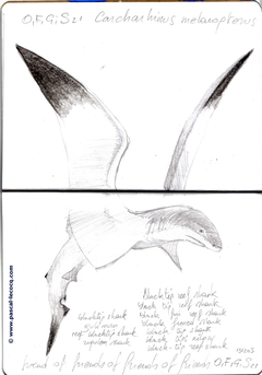 Carnet Bleu: Encyclopedia of…shark, vol.XI p26 - by Pascal
