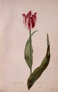 Early Brabantsson (folio 29)