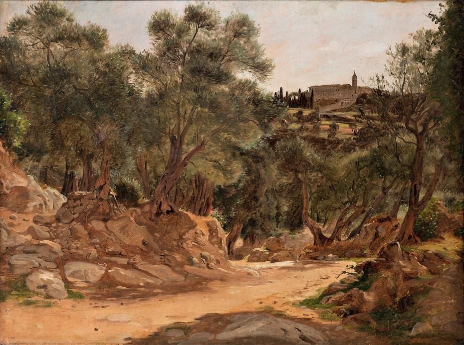 Olive Grove from Tivoli near Rome