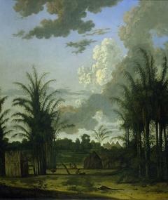 Plantation in Suriname