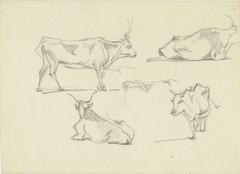 Schetsblad met vijf runderen in verschillende standen