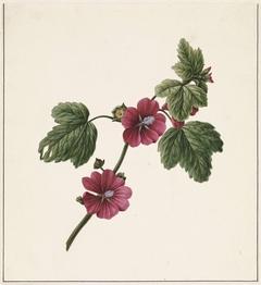 Takje met paarse bloemen