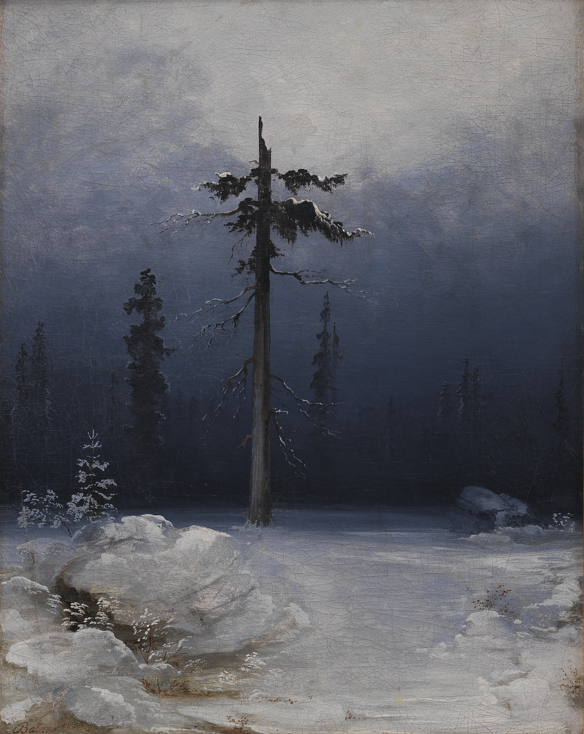 Tree in a Wintry Forest