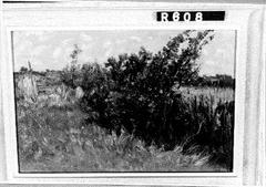 Weide met struiken en hek