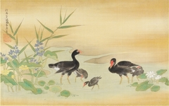 Black Birds and Tree Chickens in Pond Amid Lotus and Water Plantain