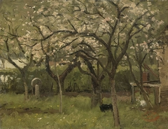 Blossoming Tree in an Orchard