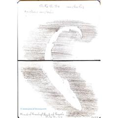 Carnet Bleu: Encyclopedia of…shark, vol.XV p20 - by Pascal