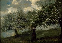 Girl Picking Apple Blossoms