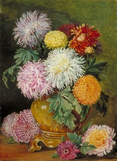 Japanese Chrysanthemums, Cultivated in This Country