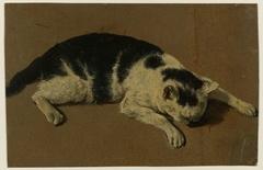 Kat liggend met de kop tussen de voorpoten