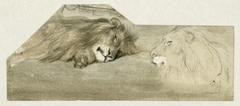 Studies van twee leeuwen