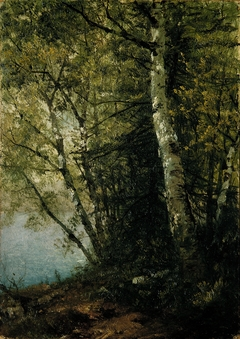 Study of Beeches