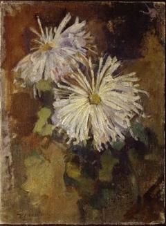 Two chrysanthemum blossoms