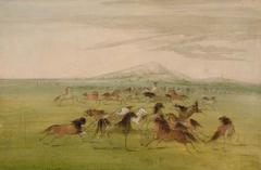 Wild Horses at Play