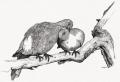 Animal Series-Floating zoo #3