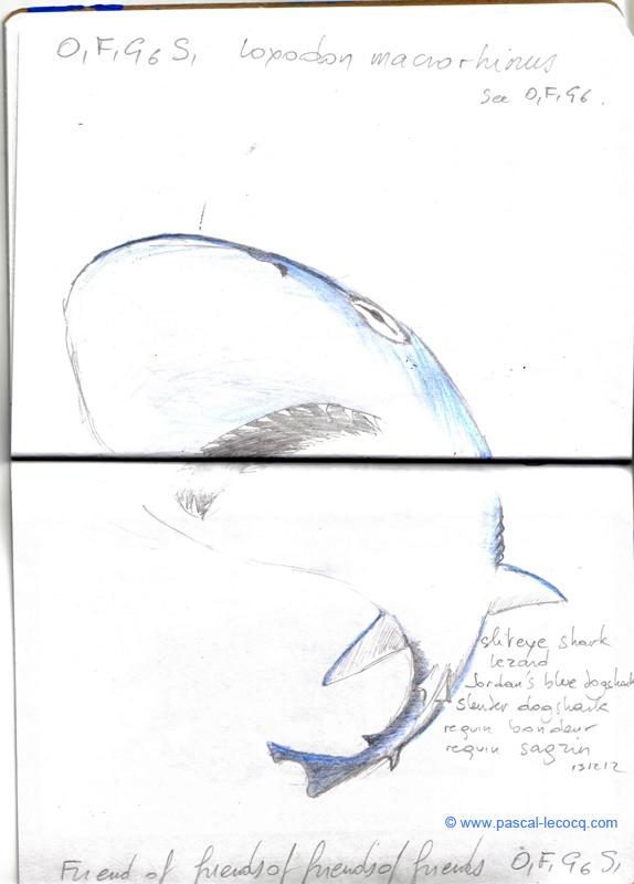 Carnet Bleu: Encyclopedia of…shark, vol.XII p30 - by Pascal