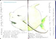 Carnet Bleu: Encyclopedia of…shark, vol.XIII p08 - by Pascal