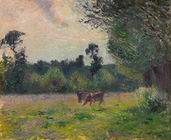Cows in a Meadow, Sunset
