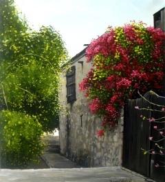 Cypriot Lane