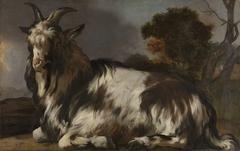 Goat Lying Down