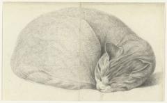 Opgerold liggende, slapende kat
