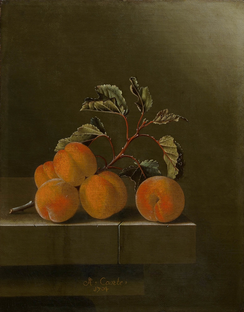 Still life with five apricots