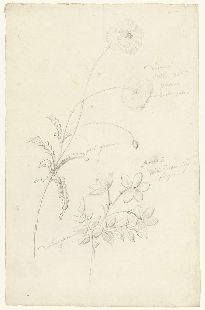 Studies van papaver en jasmijn