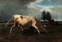 Vaca perseguida por un can