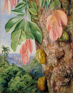 View in Singapore with Nyum-Nyum Tree