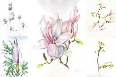 botanical art 2