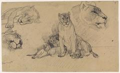 Studieblad met leeuwen en welpen