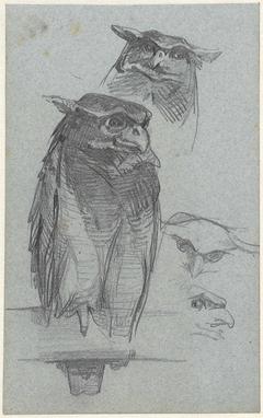 Studies van een uil