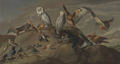 Study of Bird