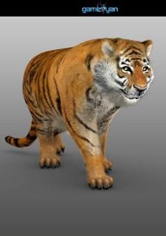 Tiger Animal Character Modeling