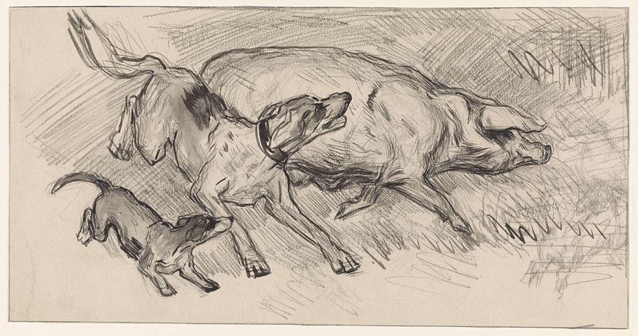 Twee honden die een varken opjagen