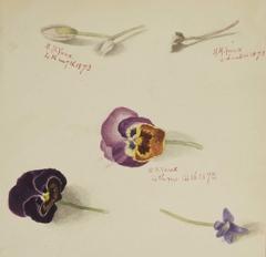(Untitled--Flower Study)