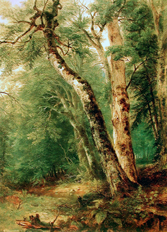 Woodland Interior