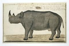 Zwarte neushoorn (Diceros bicornis): mannetje
