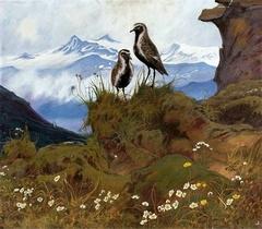 Birds in a mountain landscape.