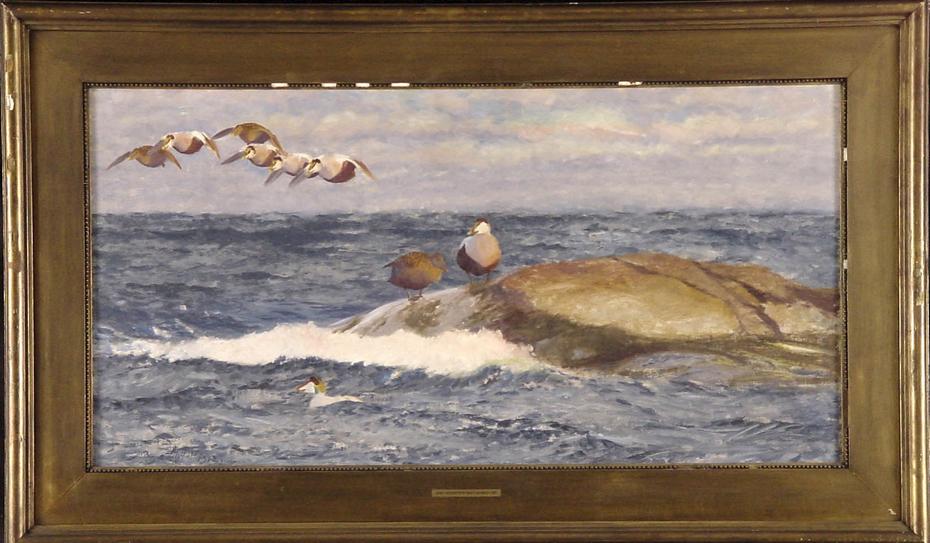 Eidereenden boven woelige zee