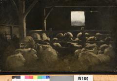 Interieur van schapenstal (Ewijkshoeve)