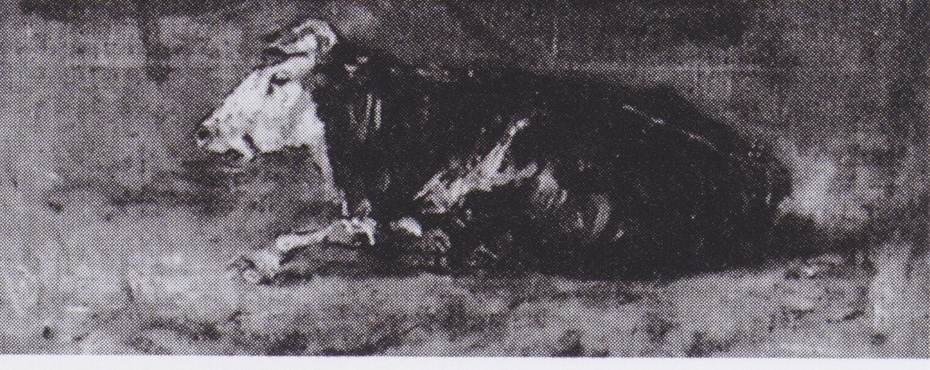 Lying Cow