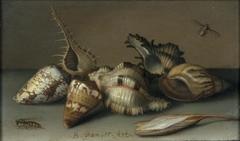 Still Life with Shells and an Autumn Crocus