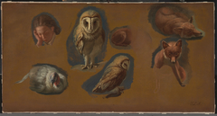 Studies of a Fox, a Barn Owl, a Peahen, and the Head of a Young Man