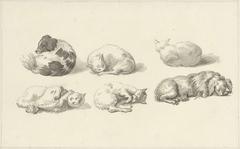 Studies van liggende honden en katten