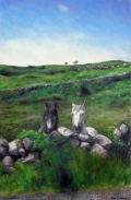 Connamara-Horses