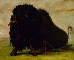 Dying Buffalo, Shot with an Arrow