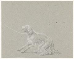 Hond aan een riem