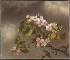 Hummingbird and Apple Blossoms